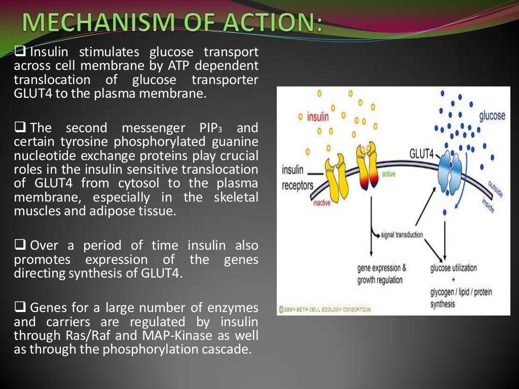 Insulin mechanism of action pdf