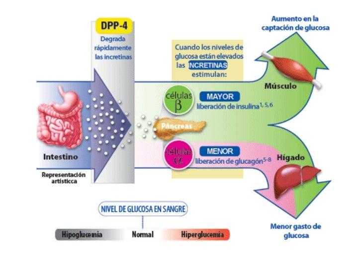 Pdf diabetes mellitus tipo 1 y 2