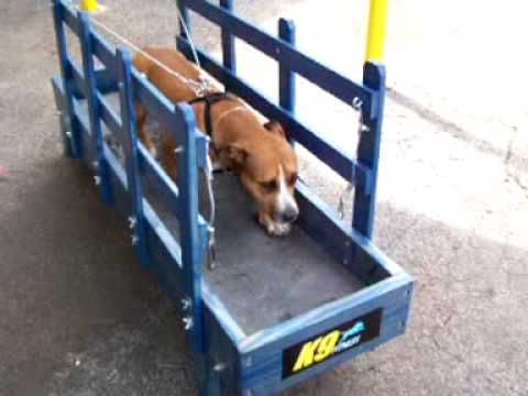 human manual treadmill for dogs