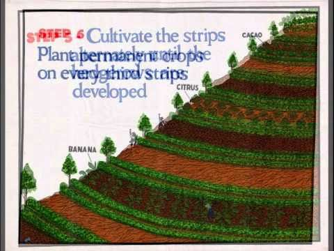 Sloping agricultural land technology pdf