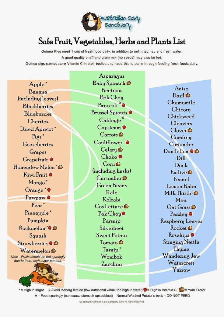 Guinea pig food list pdf