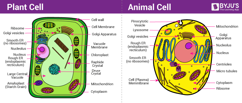 Plant and animal cell parts and functions pdf